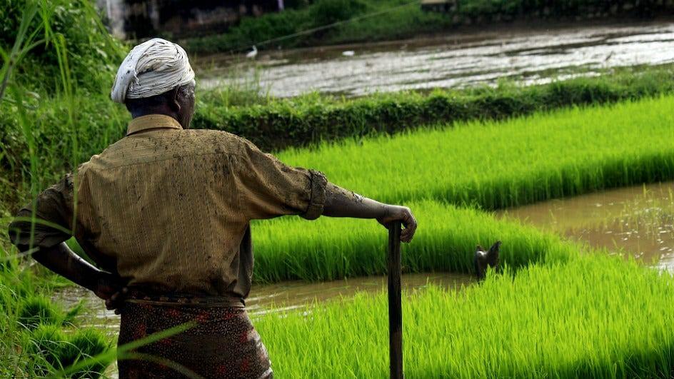 Teji Mandi Explains: Revival is crucial for rural economy