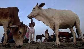 Cow vigilante killed in Gujarat; 10 arrested