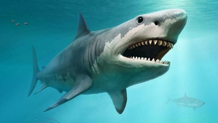 Sharks went nearly extinct 19 million years ago: Study