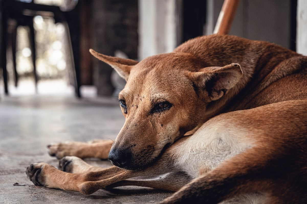 Andhra Pradesh: Over 300 dogs poisoned to death by village panchayat, case registered after activist files complaint