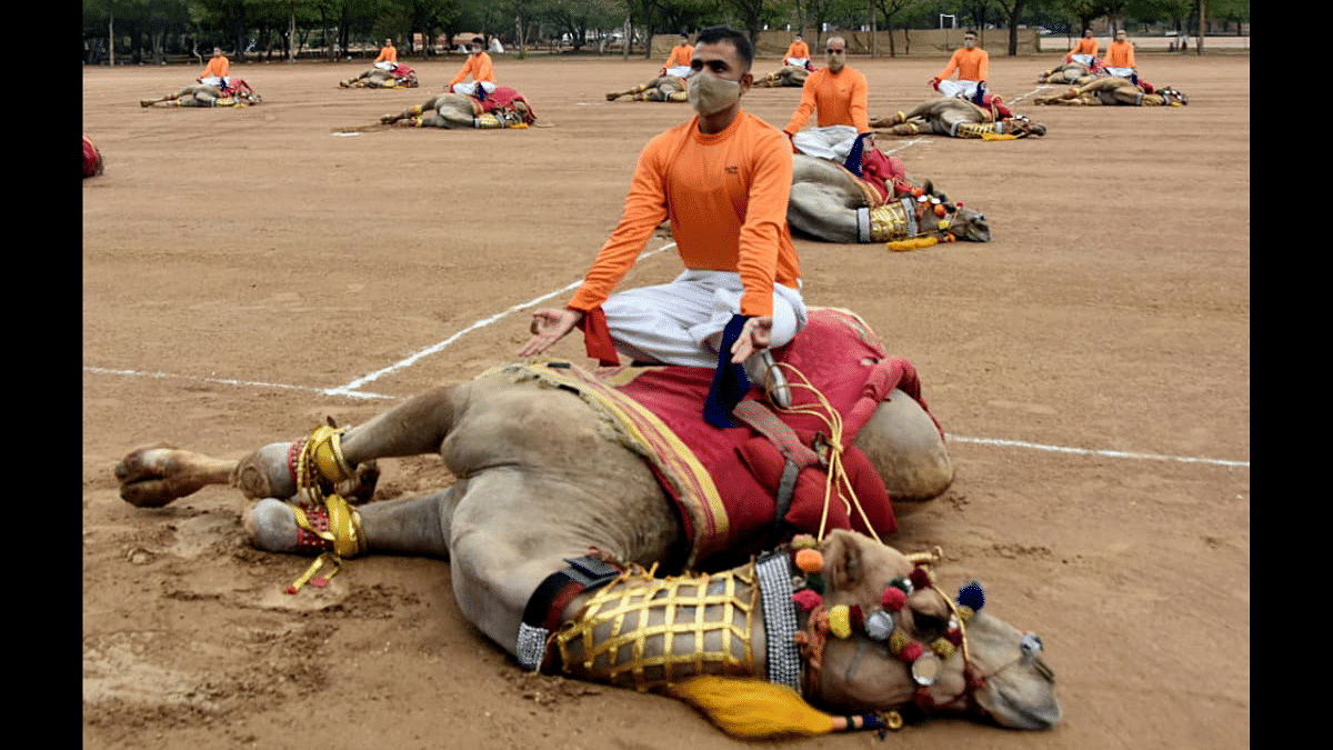 'Don't overdo things for pictures': Picture showing BSF personnel posing over camel on International Yoga Day goes viral; netizens enraged