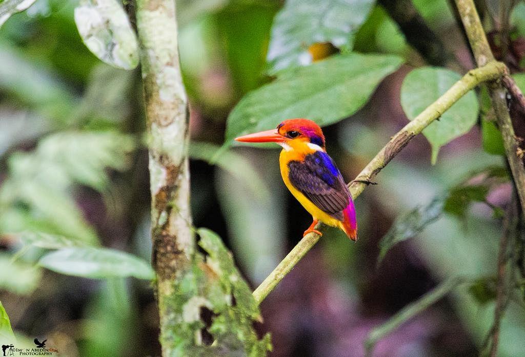 #DekhoApnaDesh: Assam's newly upgraded Dehing Patkai National Park is marvellous reservoir of flora and fauna; see pics