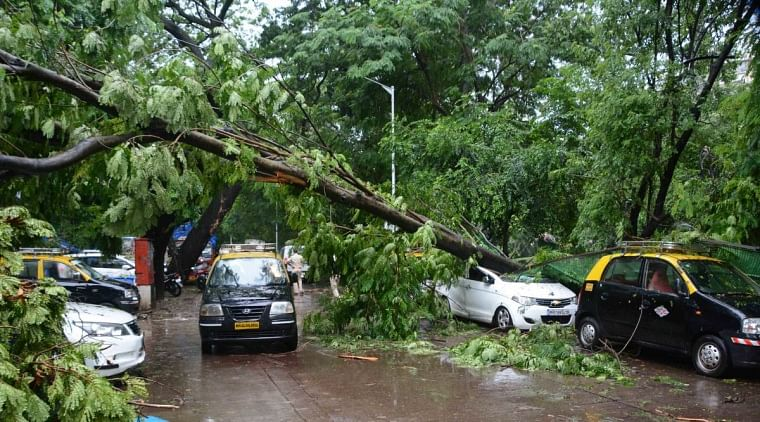 Mumbai: BMC appoints arborist to conduct audit of trees in D ward