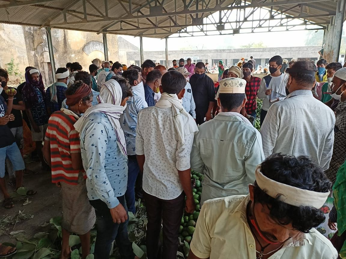 Alirajpur: Farmers unhappy as they don't get adequate price for mangoes, blame middlemen, traders for loss
