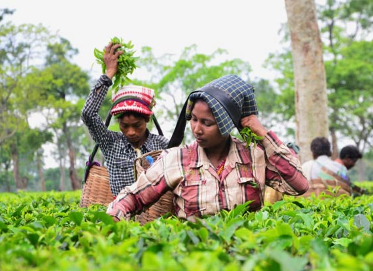 Induslnd Bank acquires stake in tea company McLeod Russel India