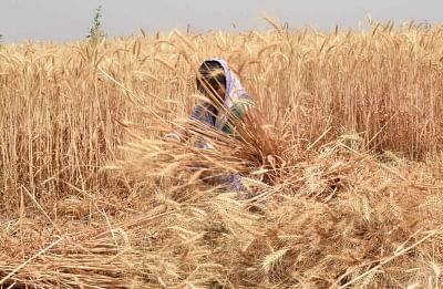 Mumbai: Agriculture reform bill to protect farmers' interest, says Thorat