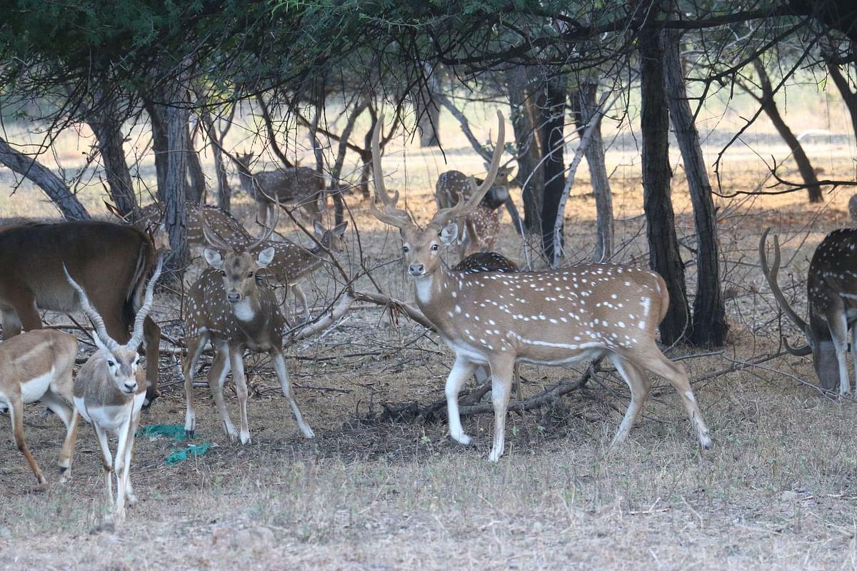Indore: Ecotourism-cum-adventure park to be set up at Umrikheda soon