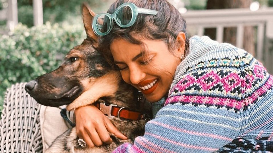 Priyanka Chopra Jonas offers a glimpse of weekend spent with her dogs; see pic