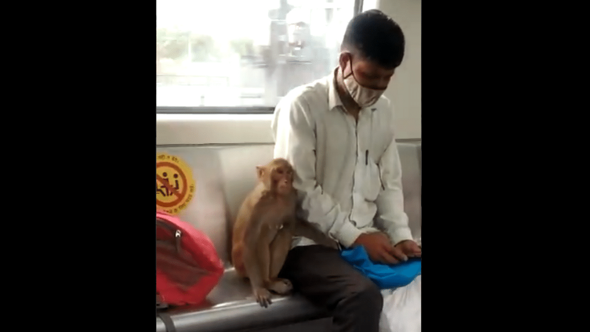 Delhi Metro issues statement after monkey spotted in train