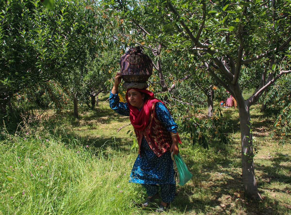 A Kashmiri woman carries lunch for farmers working at the orchard in a village in the Tangmarg area of Baramulla district in  Jammu & Kashmir.