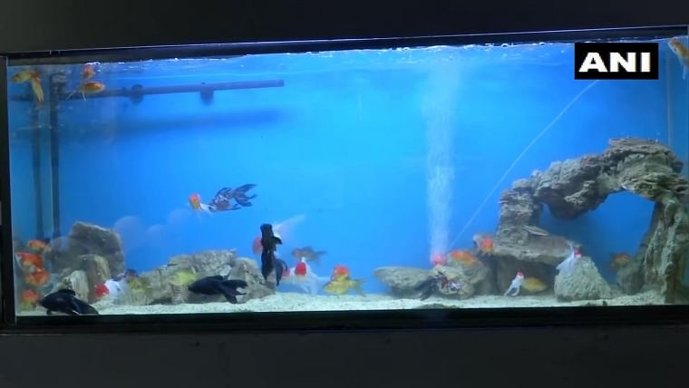 In pics: India's first tunnel aquarium opens at KSR Bengaluru railway station