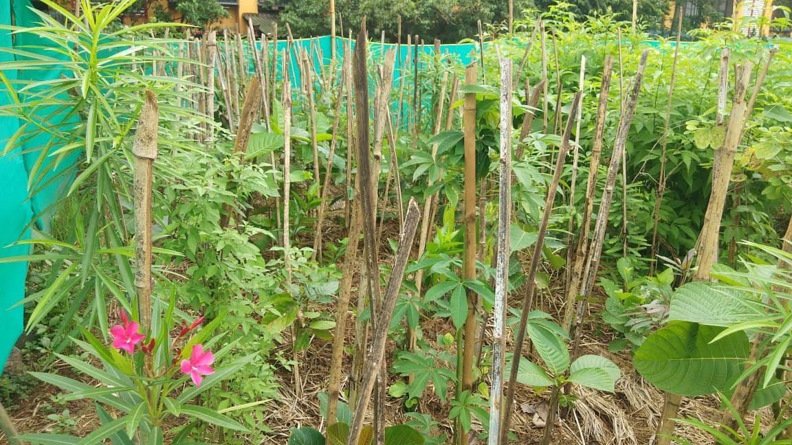 Mumbai: Central Railway's Miyawaki garden at Kurla LTT blooms