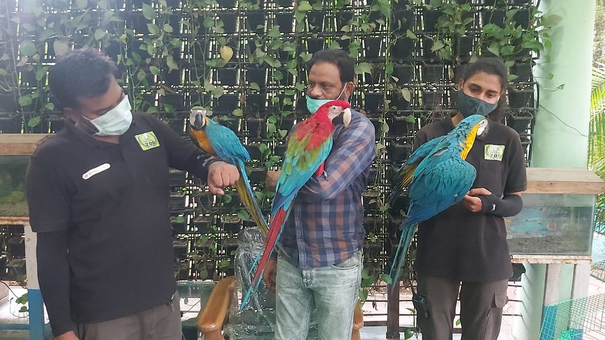 Indore: Adding a dash of colour, three Macaws reach city zoo