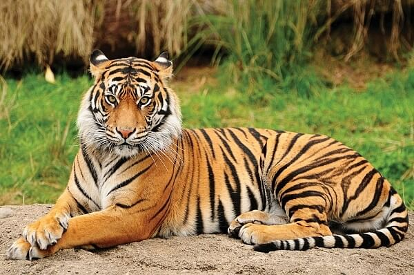 Patrolling team spotted it on Monday in a resort campus, said Pench Tiger Reserve Field Director Vikram Singh Parihar