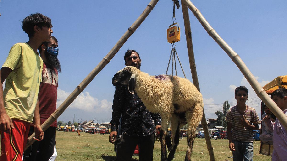 In Photos: Kashmiris prepare for Eid al-Adha celebrations; visit markets to buy livestock