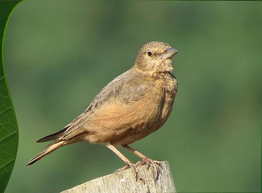 Bhopal: Birds NGO throws light on Urban Biodiversity