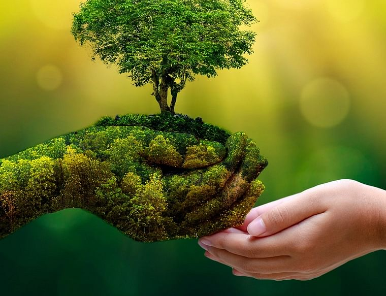 Nature conservation: Want to be a 'green crusader'? Here's how you can be one