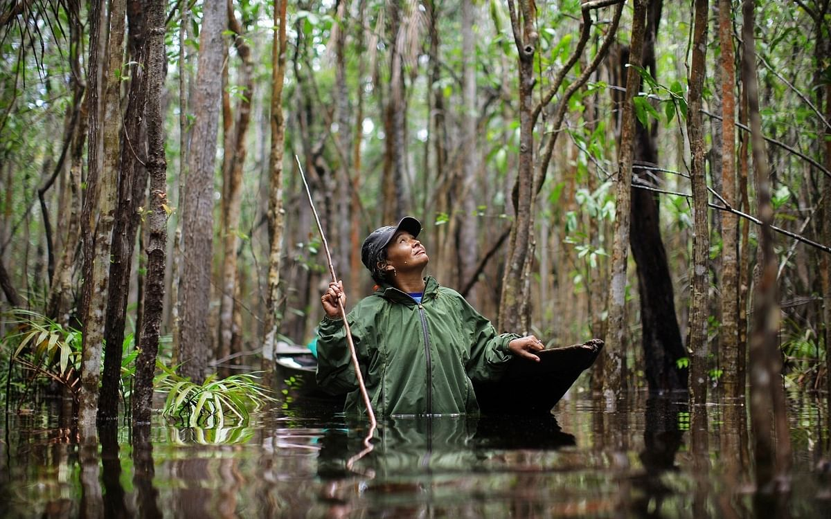 Scientists develop new tracking system for monitoring danger to rainforests