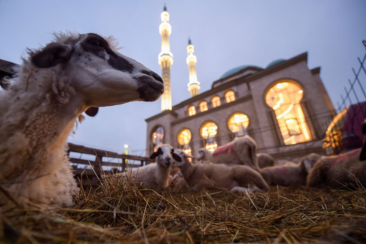Sheep lie down in the straw in front of a mosque near Pristina, Kosovo, on July 20, 2021, during the sacrificial Eid al-Adha festival.