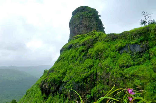 Panvel: Karnala bird sanctuary reopens for tourists after more than two months
