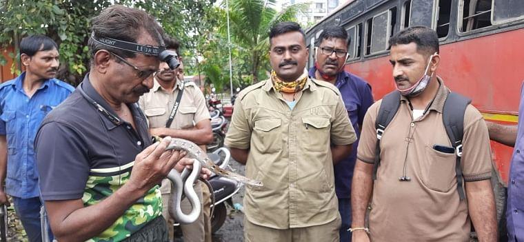 Thane: Snake found in Bhiwandi-Kalyan ST bus, rescued