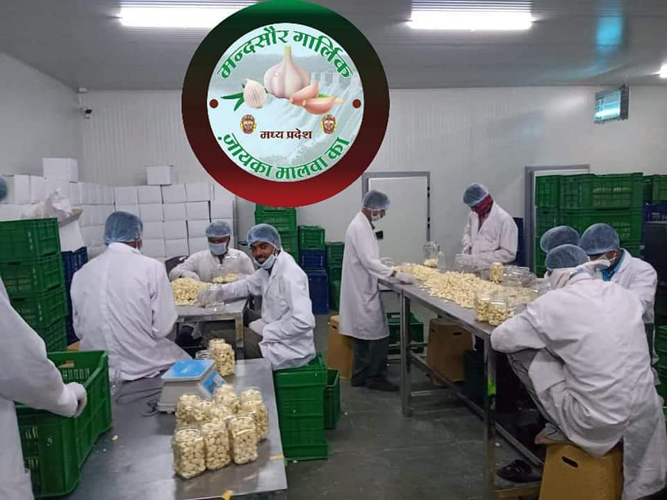 Garlic packaging unit in Mandsaur