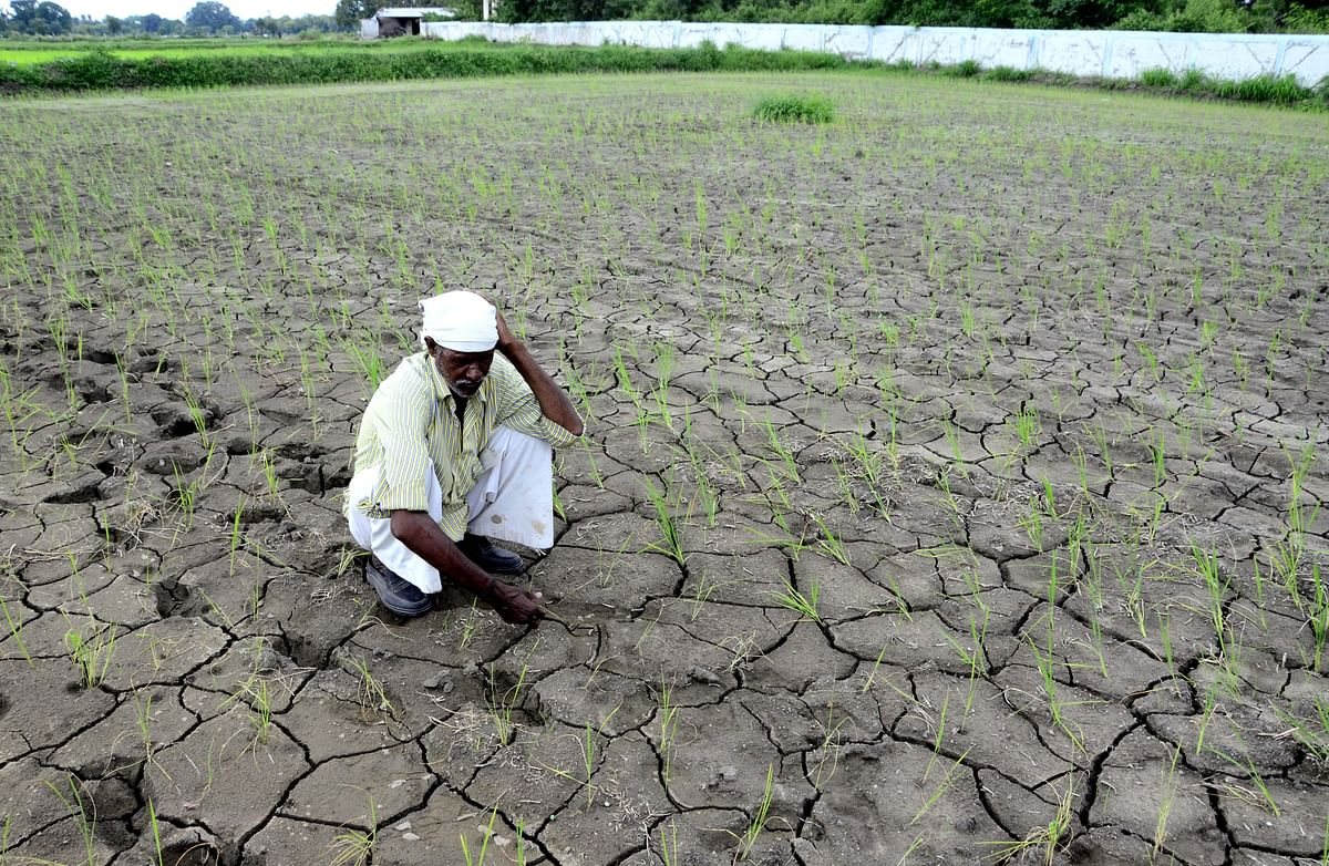 Indore: As skies finally break, a little rain adds life to standing crop