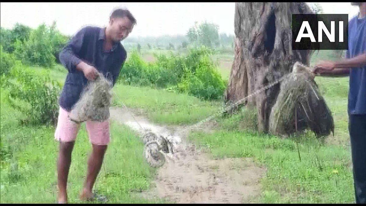 The snake weighed about 8 kilograms