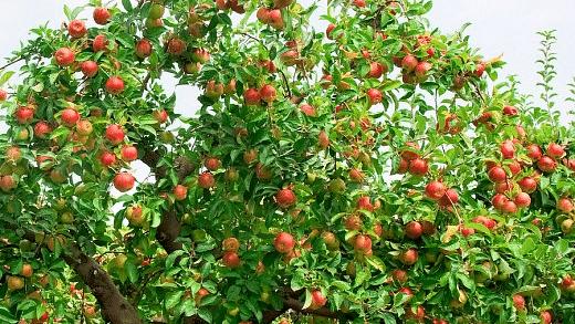 13 types of fruit trees not to be planted along Mumbai-Nagpur expressway