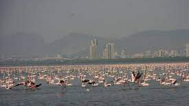 Mumbai: State proposes Thane Flamingo Sanctuary to be first Ramsar site in MMR