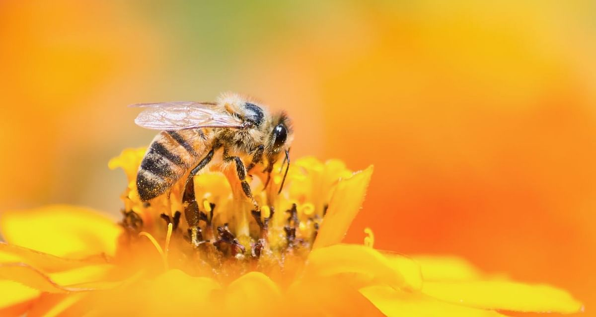 From boosting immunity to alleviating stress, here are the many benefits of including bee pollen in your diet