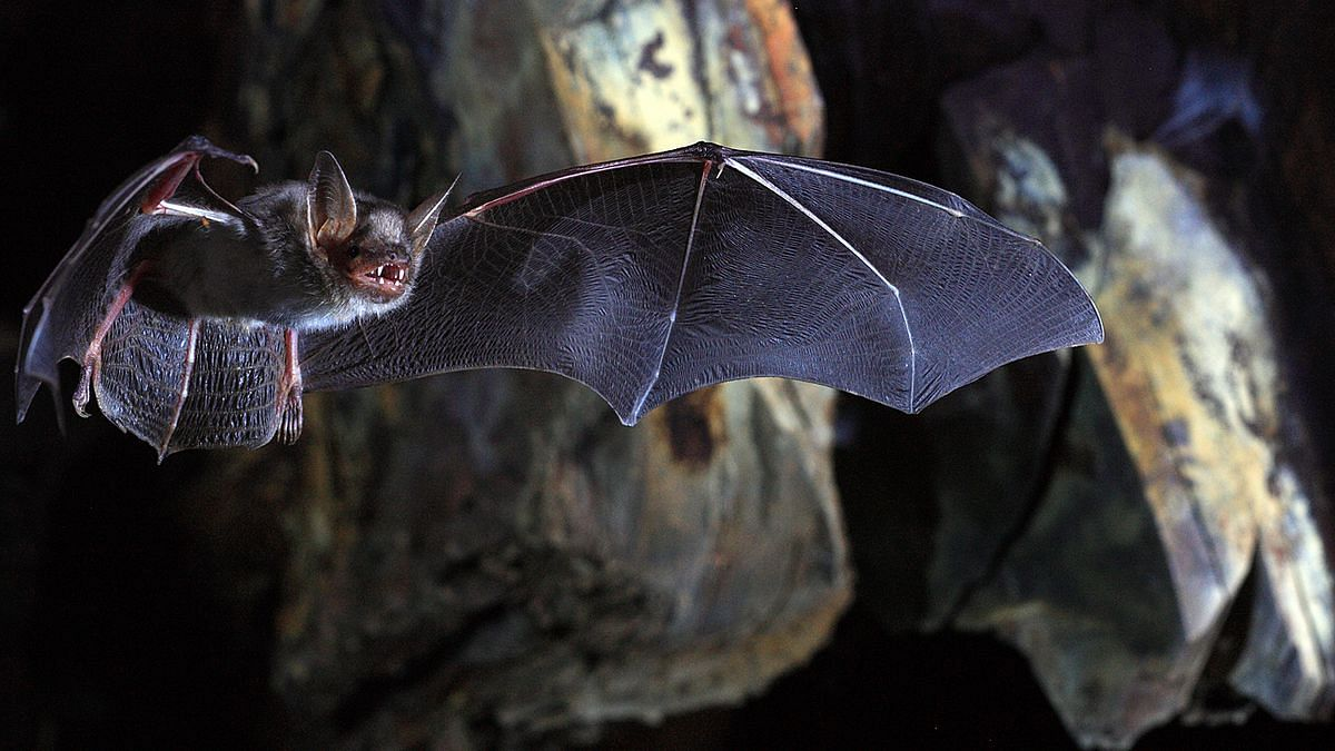 Scientists discover novel coronavirus in British bats