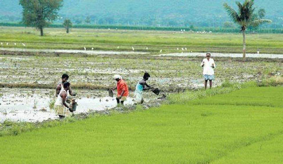No proposal under consideration to waive loans to farmers, including those from SC/ST category: Centre to Parliament