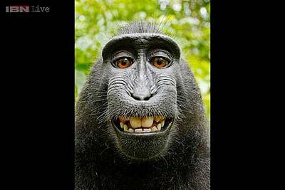 Monkey can't hold copyright: US regulator