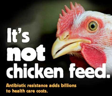 FDA to check chicken  for traces of antibiotics