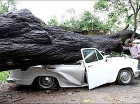 BMC GETS TO THE ROOT OF TREE CRASHES
