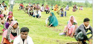 7.23 lakh saplings planted in div