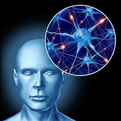 Mechanism behind many immune diseases found