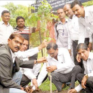 Plantation drive at  district court premises