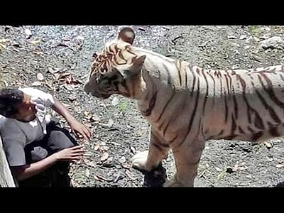 Man killed in tiger attack at Bramhapuri forest