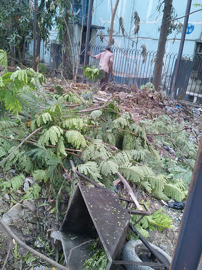 Mira Rd builder faces  arrest for axing trees