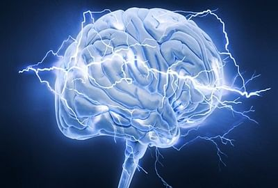 Brains too can get fossilised: study