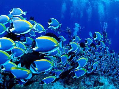 700 marine species threatened by plastic debris: Study