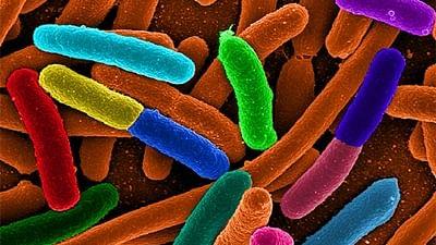 New method uses viruses to kill bacteria