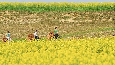 Pradhan Mantri Fasal Bima Yojana is 'farmer-friendly': PM Modi