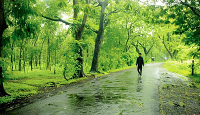 Mumbai: Arey, Aarey has just some trees