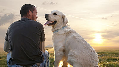 Dogs trained to detect prostate  cancer with 90 per cent accuracy