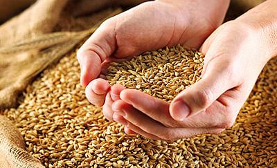 Teji Mandi Explains: Agrochemicals industry expects a strong Kharif season