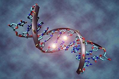 Genes determine how sensitive you are