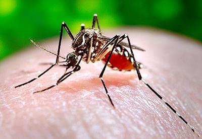 Zika Virus Scare: MoHWF's team implements containment plan